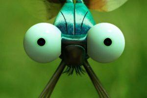 ดูหนัง Minuscule Season 1 เปิดโลกแมลงจิ๋ว ปี 1 ตอนที่ 53