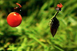 ดูหนัง Minuscule Season 1 เปิดโลกแมลงจิ๋ว ปี 1 ตอนที่ 57