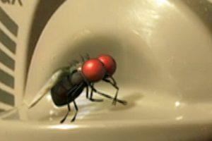 ดูหนัง Minuscule Season 1 เปิดโลกแมลงจิ๋ว ปี 1 ตอนที่ 67