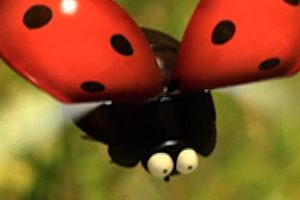 ดูหนัง Minuscule Season 1 เปิดโลกแมลงจิ๋ว ปี 1 ตอนที่ 73