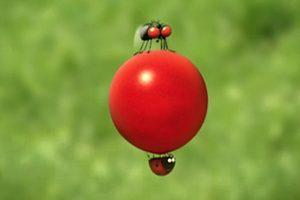 ดูหนัง Minuscule Season 1 เปิดโลกแมลงจิ๋ว ปี 1 ตอนที่ 77