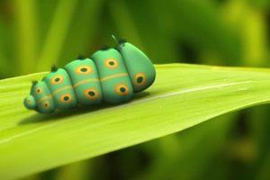 ดูหนัง Minuscule Season 2 เปิดโลกแมลงจิ๋ว ปี 2 ตอนที่ 11