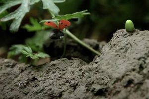 ดูหนัง Minuscule Season 2 เปิดโลกแมลงจิ๋ว ปี 2 ตอนที่ 27