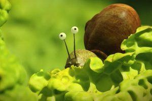 ดูหนัง Minuscule Season 2 เปิดโลกแมลงจิ๋ว ปี 2 ตอนที่ 36