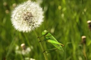 ดูหนัง Minuscule Season 2 เปิดโลกแมลงจิ๋ว ปี 2 ตอนที่ 39