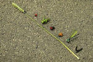 ดูหนัง Minuscule Season 2 เปิดโลกแมลงจิ๋ว ปี 2 ตอนที่ 53
