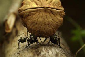 ดูหนัง Minuscule Season 2 เปิดโลกแมลงจิ๋ว ปี 2 ตอนที่ 64