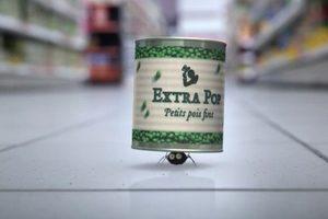 ดูหนัง Minuscule Season 2 เปิดโลกแมลงจิ๋ว ปี 2 ตอนที่ 65
