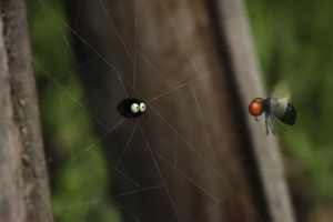ดูหนัง Minuscule Season 2 เปิดโลกแมลงจิ๋ว ปี 2 ตอนที่ 7