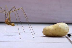 ดูหนัง Minuscule Season 2 เปิดโลกแมลงจิ๋ว ปี 2 ตอนที่ 76