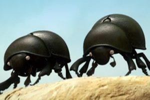 ดูหนัง Minuscule Season 1 เปิดโลกแมลงจิ๋ว ปี 1 ตอนที่ 15