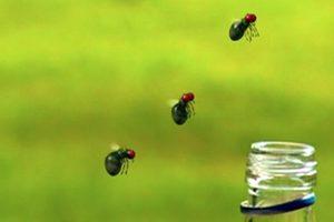 ดูหนัง Minuscule Season 1 เปิดโลกแมลงจิ๋ว ปี 1 ตอนที่ 25