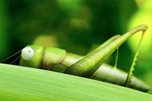 ดูหนัง Minuscule Season 1 เปิดโลกแมลงจิ๋ว ปี 1 ตอนที่ 27