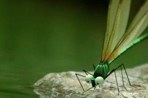 ดูหนัง Minuscule Season 1 เปิดโลกแมลงจิ๋ว ปี 1 ตอนที่ 33