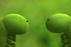 ดูหนัง Minuscule Season 1 เปิดโลกแมลงจิ๋ว ปี 1 ตอนที่ 37