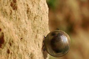 ดูหนัง Minuscule Season 1 เปิดโลกแมลงจิ๋ว ปี 1 ตอนที่ 40