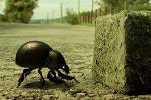 ดูหนัง Minuscule Season 1 เปิดโลกแมลงจิ๋ว ปี 1 ตอนที่ 42