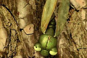 ดูหนัง Minuscule Season 1 เปิดโลกแมลงจิ๋ว ปี 1 ตอนที่ 44