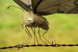 ดูหนัง Minuscule Season 1 เปิดโลกแมลงจิ๋ว ปี 1 ตอนที่ 5