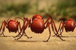 ดูหนัง Minuscule Season 2 เปิดโลกแมลงจิ๋ว ปี 2 ตอนที่ 32