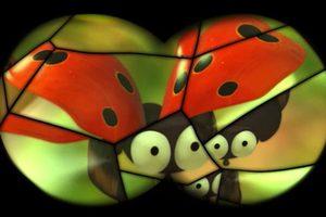 ดูหนัง Minuscule Season 2 เปิดโลกแมลงจิ๋ว ปี 2 ตอนที่ 50
