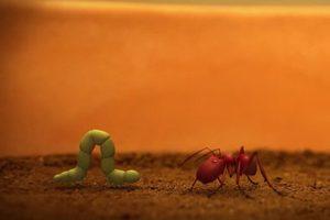 ดูหนัง Minuscule Season 2 เปิดโลกแมลงจิ๋ว ปี 2 ตอนที่ 52