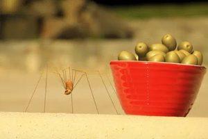 ดูหนัง Minuscule Season 2 เปิดโลกแมลงจิ๋ว ปี 2 ตอนที่ 57