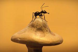 ดูหนัง Minuscule Season 2 เปิดโลกแมลงจิ๋ว ปี 2 ตอนที่ 61