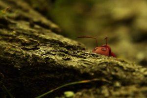 ดูหนัง Minuscule Season 2 เปิดโลกแมลงจิ๋ว ปี 2 ตอนที่ 69