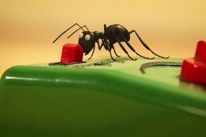 ดูหนัง Minuscule Season 2 เปิดโลกแมลงจิ๋ว ปี 2 ตอนที่ 78