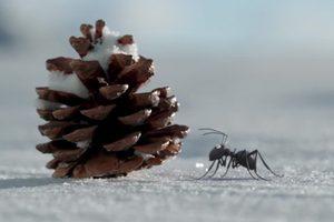 ดูหนัง Minuscule Season 2 เปิดโลกแมลงจิ๋ว ปี 2 ตอนที่ 25
