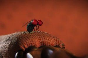 ดูหนัง Minuscule Season 2 เปิดโลกแมลงจิ๋ว ปี 2 ตอนที่ 29