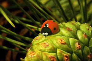 ดูหนัง Minuscule Season 2 เปิดโลกแมลงจิ๋ว ปี 2 ตอนที่ 42