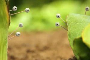 ดูหนัง Minuscule Season 2 เปิดโลกแมลงจิ๋ว ปี 2 ตอนที่ 44
