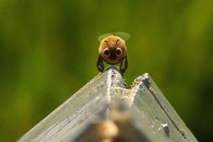 ดูหนัง Minuscule Season 2 เปิดโลกแมลงจิ๋ว ปี 2 ตอนที่ 58