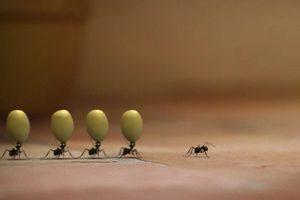 ดูหนัง Minuscule Season 2 เปิดโลกแมลงจิ๋ว ปี 2 ตอนที่ 67