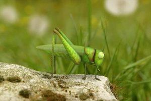 ดูหนัง Minuscule Season 2 เปิดโลกแมลงจิ๋ว ปี 2 ตอนที่ 73