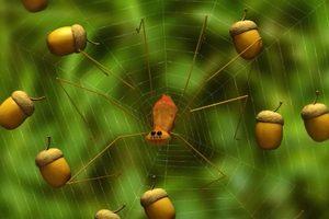 ดูหนัง Minuscule Season 2 เปิดโลกแมลงจิ๋ว ปี 2 ตอนที่ 80