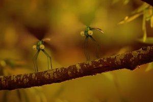 ดูหนัง Minuscule Season 2 เปิดโลกแมลงจิ๋ว ปี 2 ตอนที่ 84