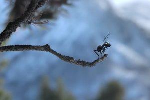 ดูหนัง Minuscule Season 2 เปิดโลกแมลงจิ๋ว ปี 2 ตอนที่ 89