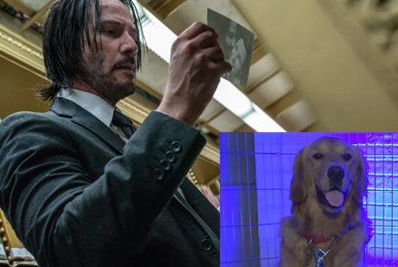 DogsReacttotheJohnWick3Trailer