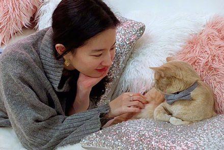 หลิวอี้เฟย เป็นทาสแมว