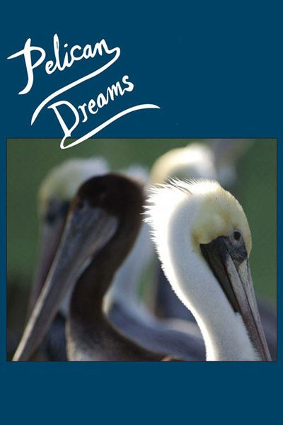 หนัง Pelican Dreams